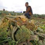 Decreto Terra dei Fuochi: contaminati solo 15 Ettari