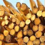 Riciclo contagioso: al via legno e rilegno