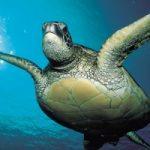 Ecoinvenzioni: la tartaruga ad energia solare che controlla la qualita' del mare
