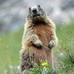 Addio parco nazionale dello Stelvio: verrà smembrato