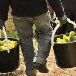 Vino biodinamico e biologico: scopriamo le differenza. Intervista con Marco Serventi
