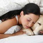 Cani e gatti nel letto: a quali rischi andiamo incontro?