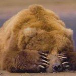 Uomini e orsi: una convivenza possibile. Video