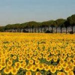 La Green Economy non conosce crisi. L'esempio dell'Emilia Romagna