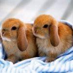 Conigli animali da compagnia. 2 anni di carcere a chi li mangia?