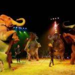 Milano dice no al circo con animali