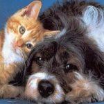 Un parco per cani e gatti su un terreno confiscato alla mafia