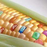 Europa invasa da OGM americani?