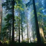 Apple impegnata nella difesa delle foreste
