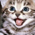 7 consigli per la salute del tuo gatto