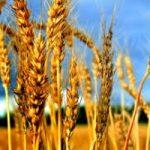 Obiettivo agricoltura: al via concorso fotografico internazionale