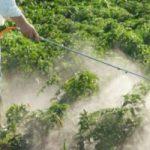 Fitofarmaci e fertilizzanti: che pericolo per l'uomo?