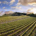 Più sostegno all'agricoltura: il nuovo decreto legge