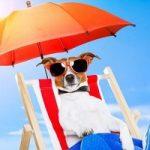 Difendiamo i nostri cani dal caldo: 5 consigli