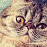 Come capire se  il nostro gatto è stressato?
