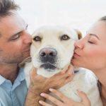 Ami gli animali? 7 consigli per rispettare la natura