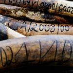 Mozambico contro i bracconieri: distrutti avorio e corni