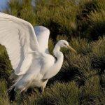 Le oasi WWF difendono la natura, ma a livello europeo non va abbassata la guardi