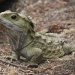 Cambiamenti climatici: e i rettili cambiano sesso