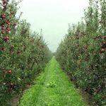 Che fine faranno i frutteti italiani?