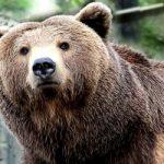 Cosa fare quando si incontra un orso (video)