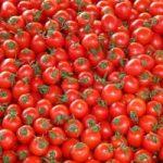 Caldo torrido: si prova a salvare i pomodori