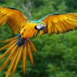 In Italia è nata una grande voliera per salvare i pappagalli Ara