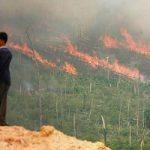Indonesia a fuoco per l'olio di palma. Un disastro naturale