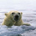 L'effetto del surriscaldamento su animali e piante: ecco le specie in pericolo