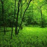 In Lombardia aumentano i boschi