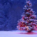 Perché l'albero è il simbolo del Natale?
