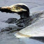Mai più petrolio in mare grazi a questa nuova tecnologia