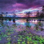 Oggi è la giornata mondiale delle zone umide