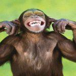 Scimmie che guidano le sedie a rotelle con le loro menti