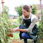 Fino a 70mila euro di agevolazioni per i giovani che vogliono puntare sull'agricoltura