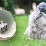 Uova stampate in 3D contro l'estinzione delle specie