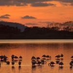 Visite gratuite nelle oasi del WWF ogni prima domenica del mese