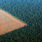 Stop alla coltivazione della soia in Amazzonia, moratoria diventa permanente. Esultano ambientalisti...