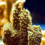 La barriera corallina sta morendo?