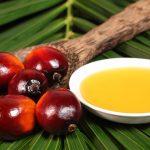Olio di palma contiene composti cancerogeni?