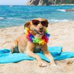 Vacanze: il 93% degli italiani non si fida ad affidare i propri animali al canile