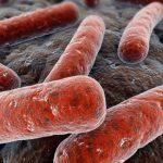 Aumentano i casi di tubercolosi in italia, l'allarme degli esperti