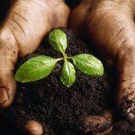 Una diverso contenuto della terra può davvero aiutare il clima?