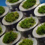 Celle solari fatte di erbacce e rifiuti organici