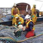 Attenzione al pesce proveniente dall'Antartico!