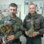 Introdurre delitti contro la fauna nel codice penale: la proposta di Legambiente