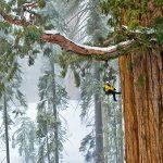 12 cose spettacolari sulle sequoie giganti
