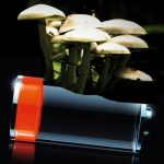 Sono i funghi la nuova speranza per il riciclaggio