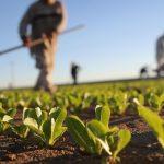 Concorso di idee per innovare l'agricoltura del sud Italia