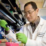 Questa molecola potrebbe essere la chiave per rigenerare il tessuto umano